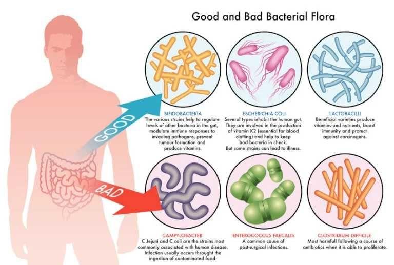 Sebabkan Diare Parah, Kenali Infeksi Bakteri Clostridium difficile