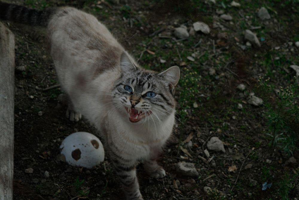 5 Pertanda Kucing Sedang Sakit, Cat Owner Harus Sadar