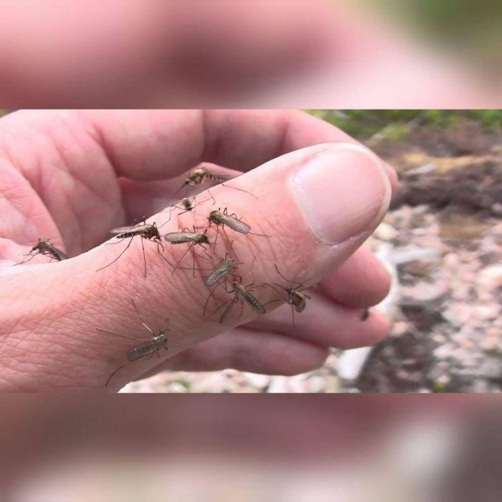10 Potret Nyamuk Hinggap di Sembarang Tempat, Semprot atau Tepuk?