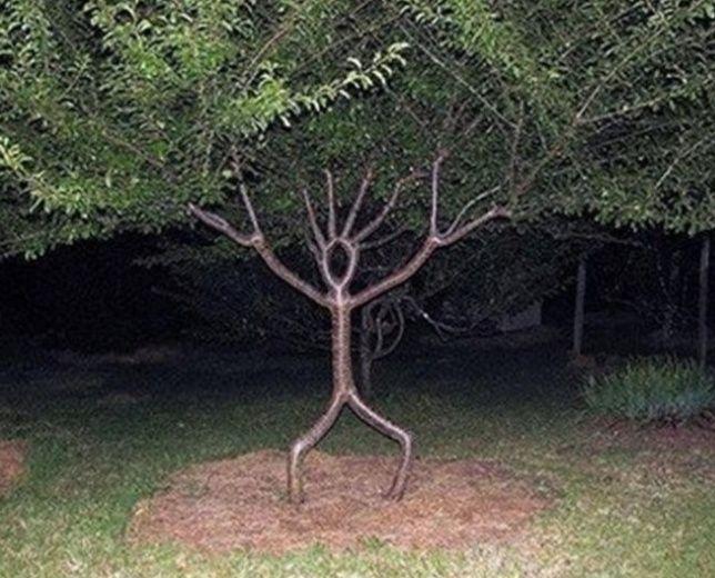 Ini 10 Penampakan Pohon Tak Biasa, Ada yang Bikin Merinding!