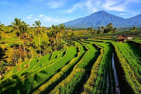 10 Potret Terasering Terindah di Indonesia, Hijaunya Nyegerin Mata!