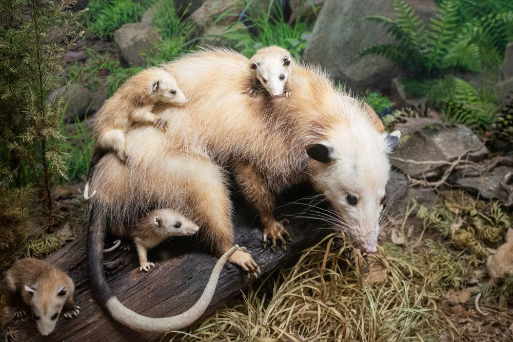 5 Karakter Unik Hewan yang Berkembang akibat Evolusi, Termasuk Kanibal