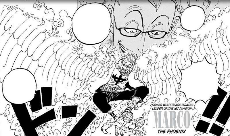 Lama Ditunggu, Marco sang Phoenix Hadir di One Piece 981!