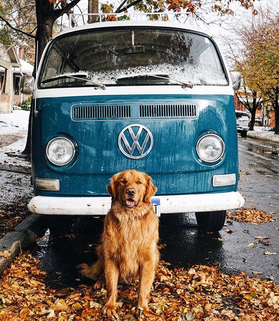 Foto My Trip My Adventure Kamu Pasti Kalah Ganteng Sama Anjing Petualang Ini!