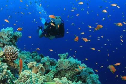 Pecinta Diorama Bawah Laut Harus Cek 8 Lokasi Snorkeling ini di Indonesia