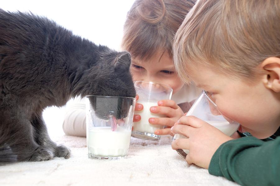 Sebenarnya Manusia Dewasa Butuh Minum Susu Gak Sih? Ini Jawabannya!