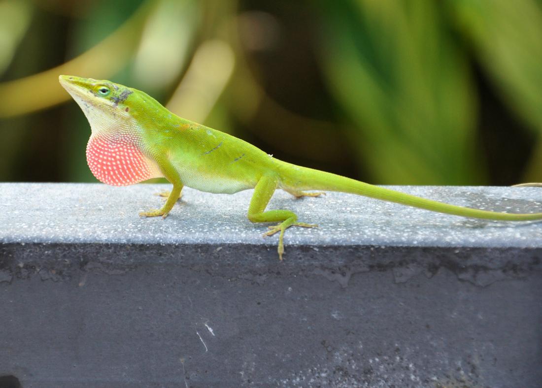 10 Spesies Ini Sedang Berevolusi, Semua Akan Tampak Beda Lebih Cepat!