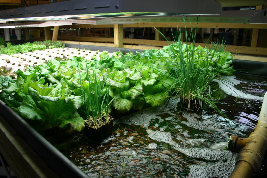 """aquaponics in india Aquaponics systems for urban and commercial farming india aquaponics was started in 2013 at chandigrah """"the idea was to start urban farming where we don't have enough land and have educated people that value and understand about health,"""" shares mr parag thakkar, founder/partner india aquaponics."""