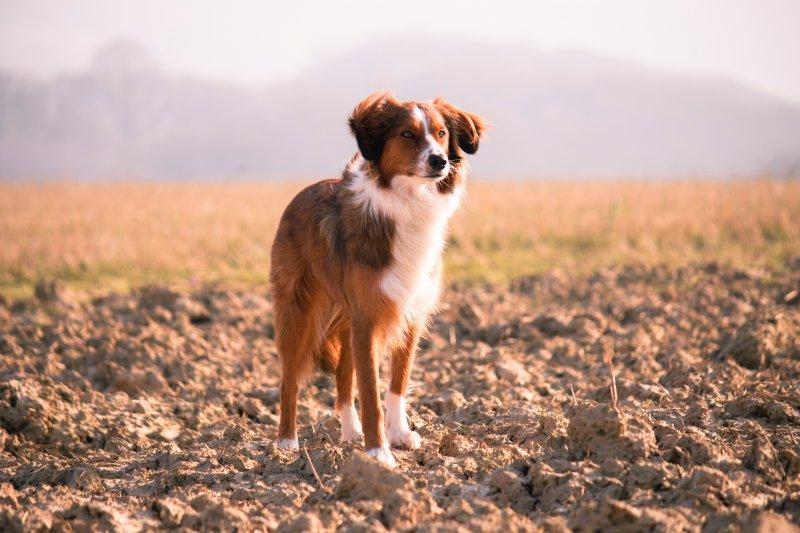 Cuti Rawat Anjing Sakit, Dosen Ini Minta Tetap Digaji Penuh