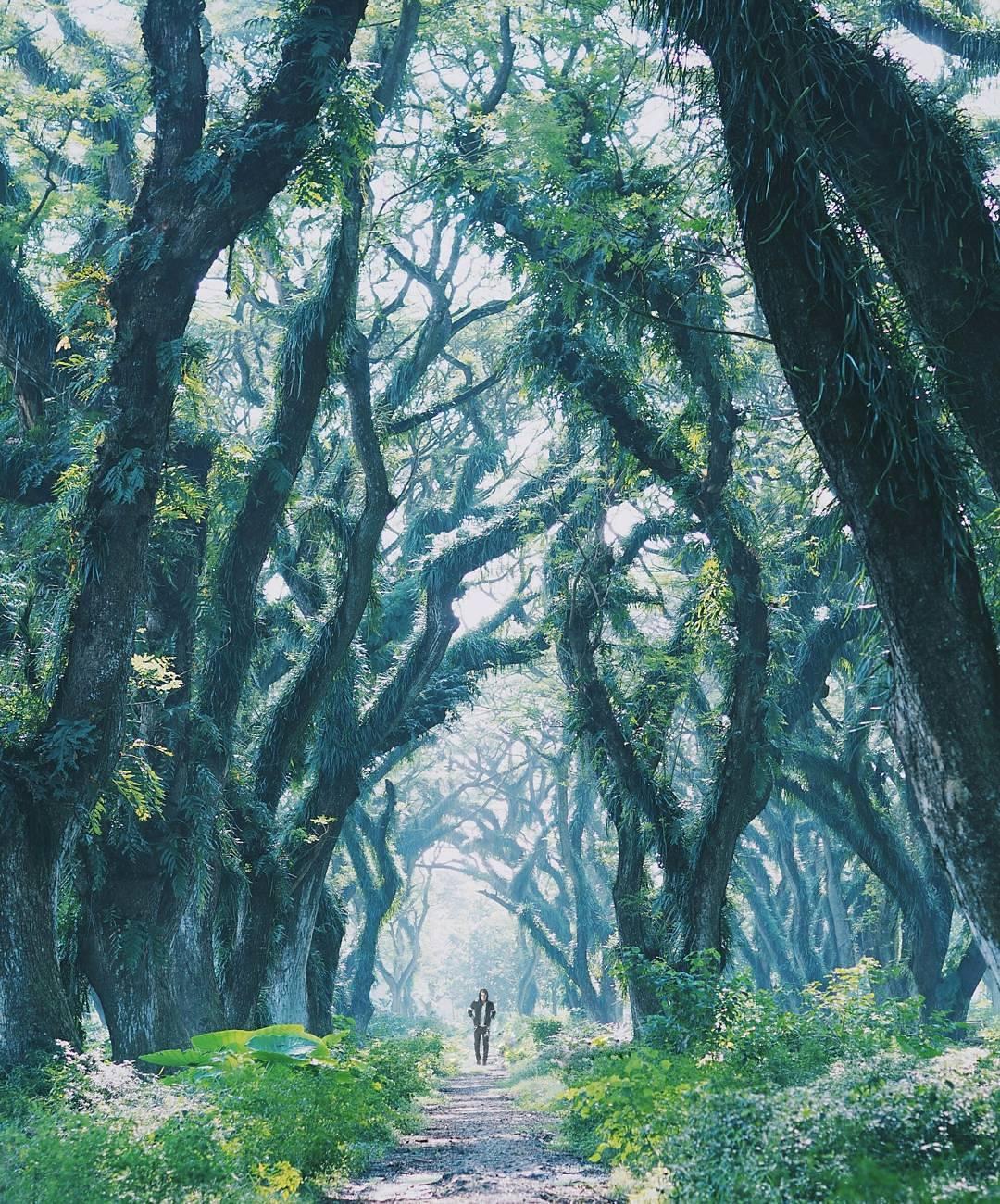 Ada Hutan ala Film Lord of the Rings di Indonesia, ke Sini Yuk!