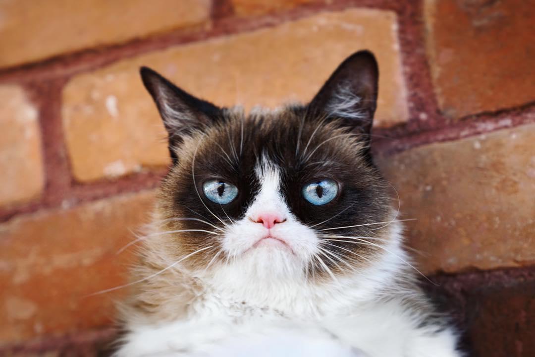 Perjalanan Grumpy Cat, Kucing Pemarah yang Jadi Miliarder