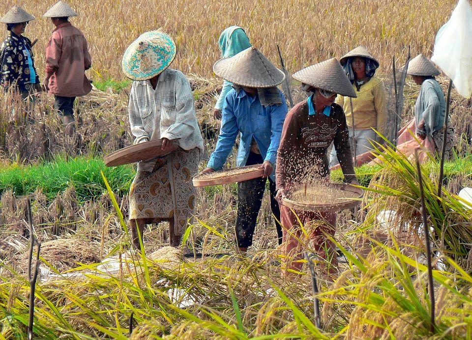 Petani Cianjur Minta Rembug Petani-Peternak Indonesia Dibatalkan