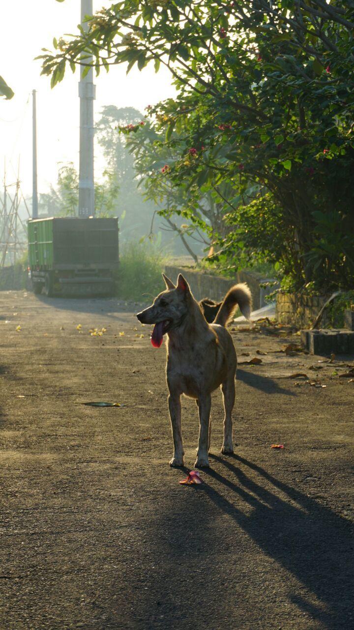 5 Penyakit yang Bisa Menginfeksi Anjing Peliharaan Bila Dibiarkan Liar
