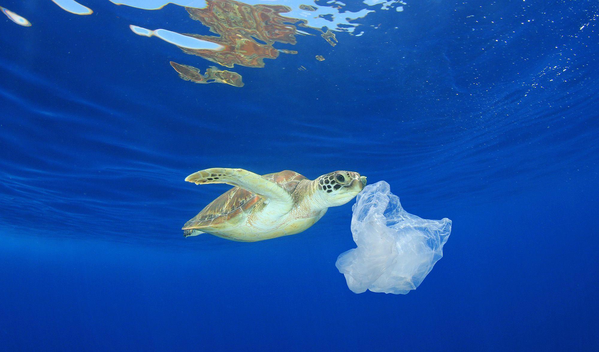 1 dari 5 Penyu Mati Hanya dengan Memakan Sebuah Plastik, Ini Kata Ahli