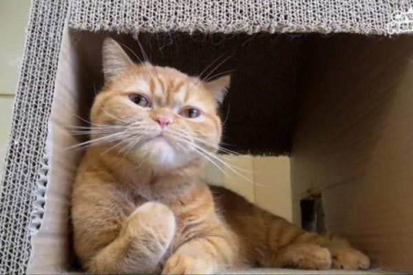 7 Fakta Menarik Tentang Kumis Kucing