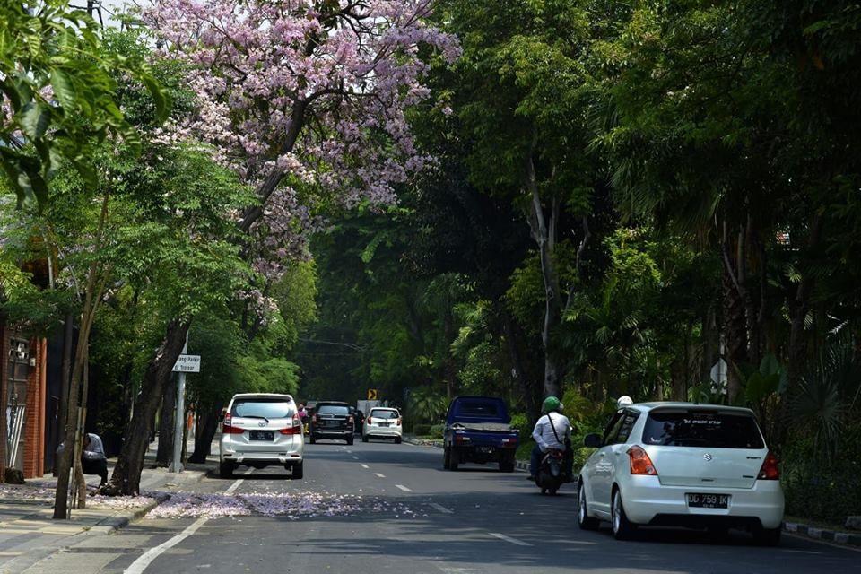 Ingin Punya Pohon Tabebuya, Sakura ala Surabaya? Begini Caranya