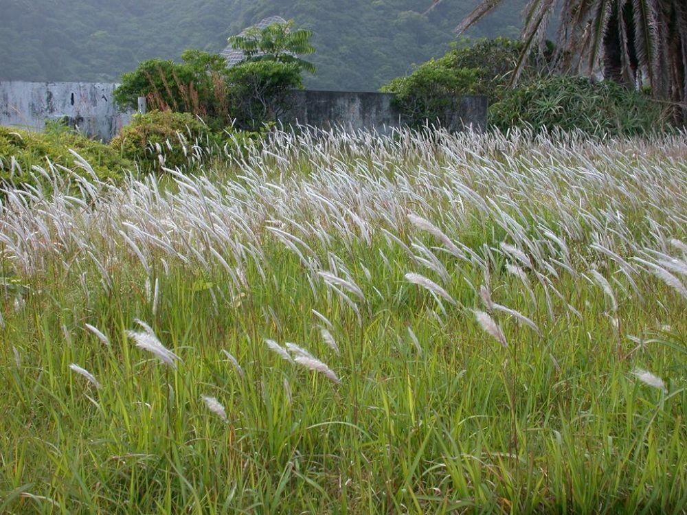 Tersesat di Hutan? 10 Tumbuhan Ini Bisa Dimakan untuk Bertahan Hidup