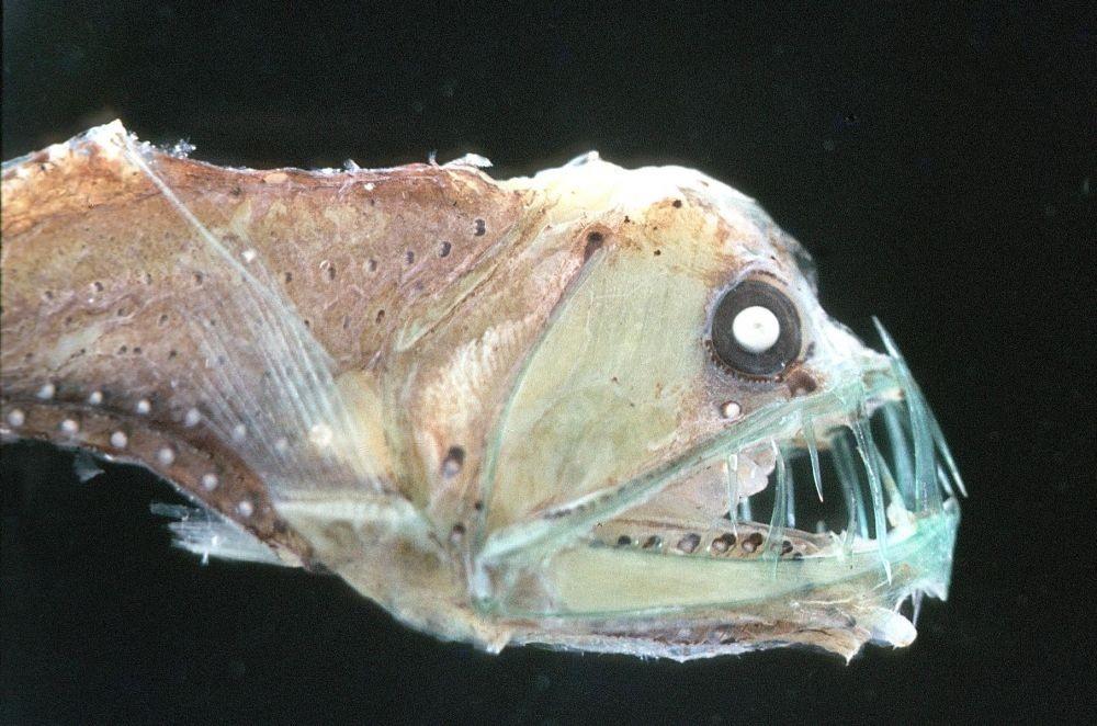 7 Zona Kedalaman Laut dan Jenis Hewan yang Hidup di Sana, Tengok Yuk!
