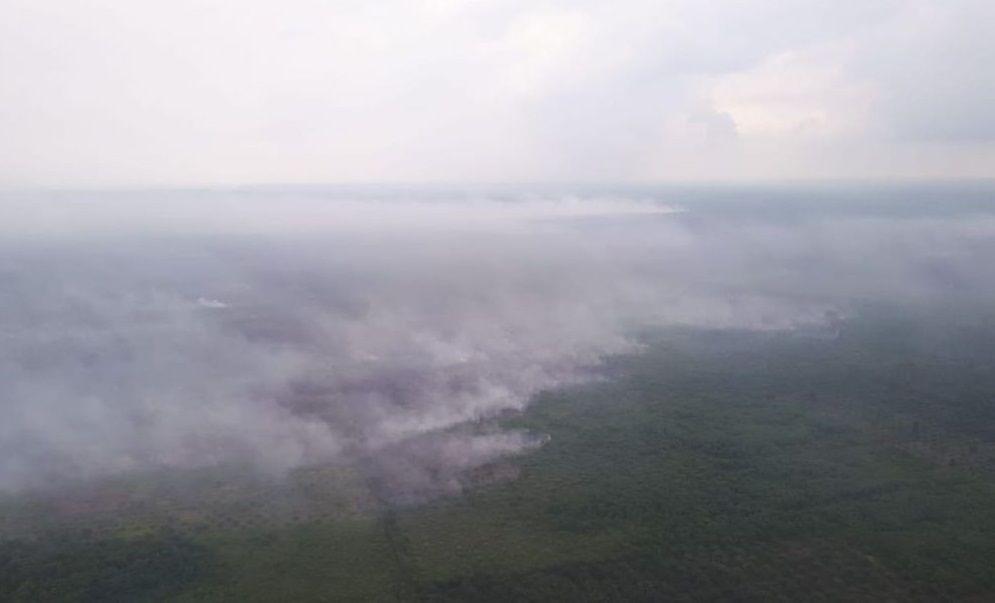 Musim Kemarau, Ancaman Kebakaran Hutan di Sumut Tinggi