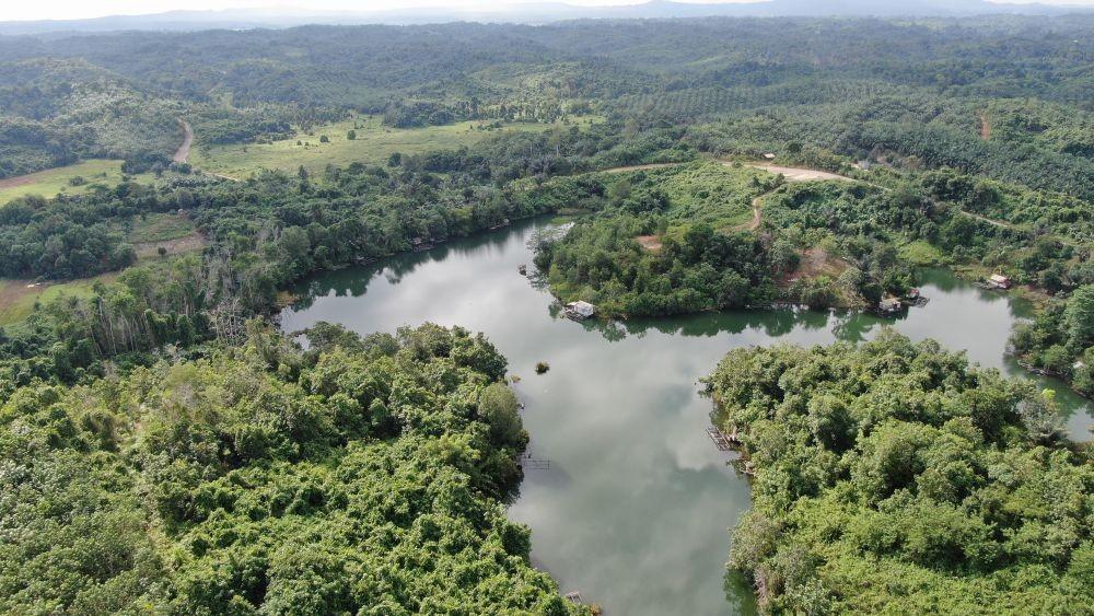 Gawat! 25 Persen Luas Hutan Tersisa di Sulsel Terancam Tambang Nikel