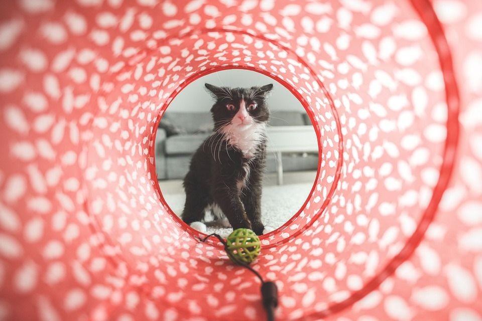 6 Tutorial Termudah Bikin Mainan Kucing,Cuma Butuh Tiga Bahan!
