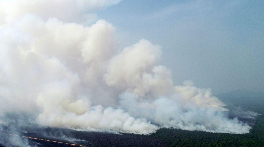 Kebakaran Hutan di Sumsel Mencapai 583 Ha, Polisi Tangkap 3 Pelaku