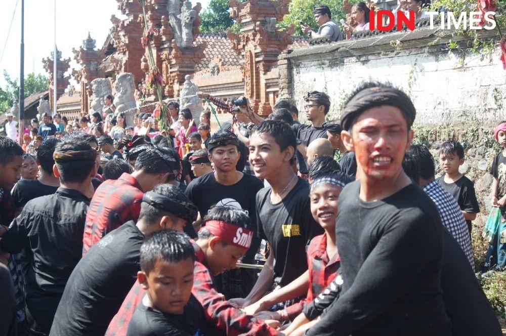Tradisi Mejaga-jaga di Klungkung, Darah Sapi Diperebutkan Untuk Obat