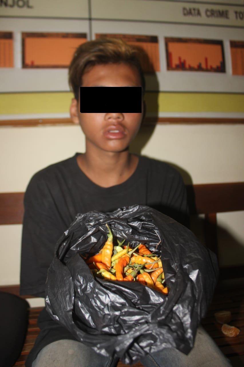 Mencuri Cabai, Remaja Asal Klaten Dihukum Makan Hasil Curian
