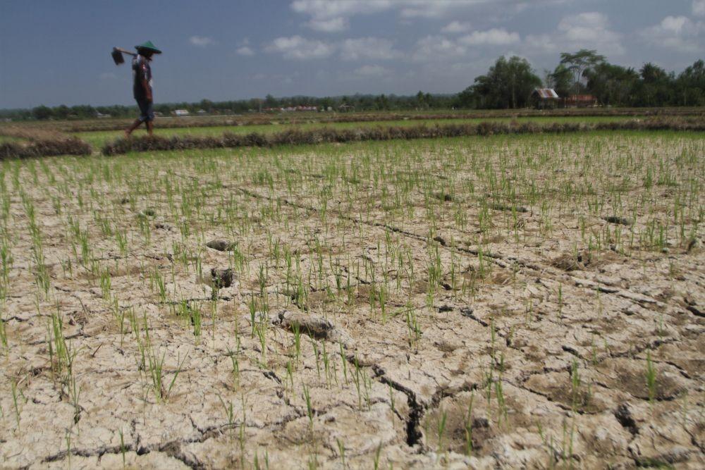 Tahun ini Kekeringan Paling Banyak Terjadi di Jawa Tengah