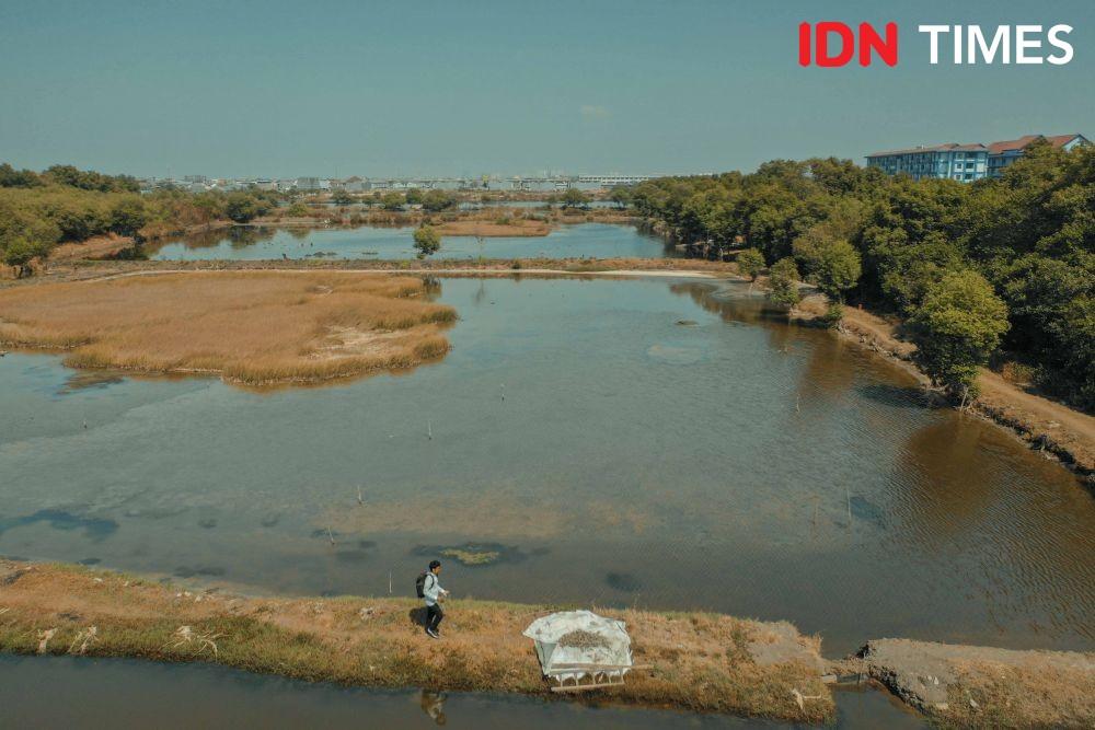 Tiap Pekan Hutan Mangrove Indonesia Hilang Seluas 3 Kali Lapangan Bola