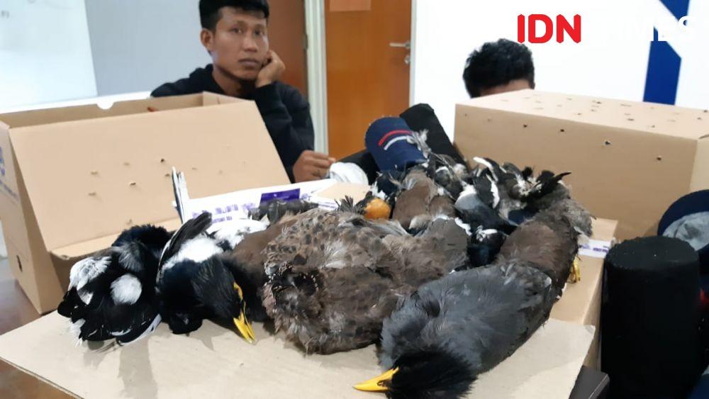 Petugas Bandara Soetta Gagalkan Penyelundupan 35 Ekor Burung