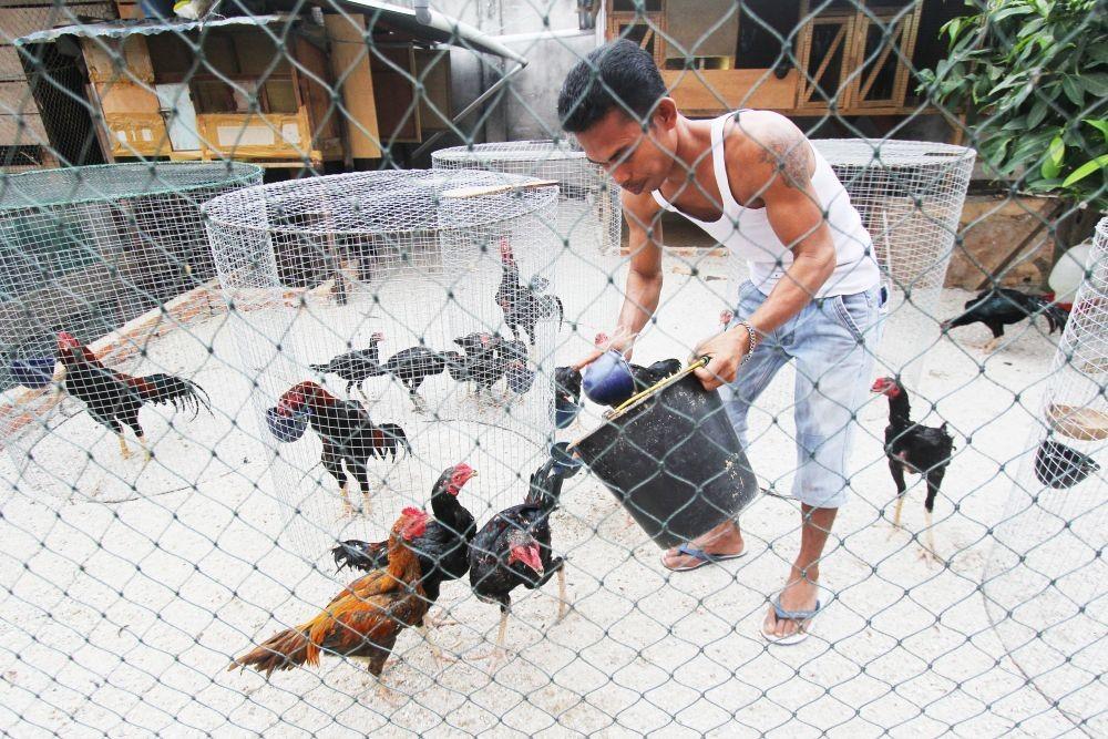 Ini Lho Hukumnya Jika Hewan Ternak Merusak Ladang Orang Lain