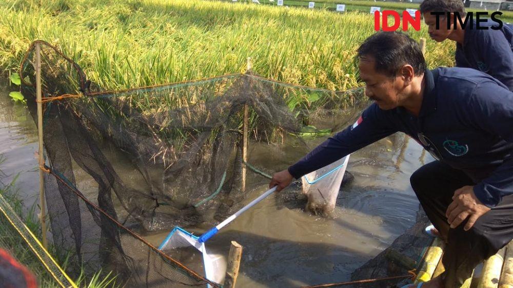 Miris, Petani Berpotensi Jadi Buruh Tanpa Lahan karena Hal Ini
