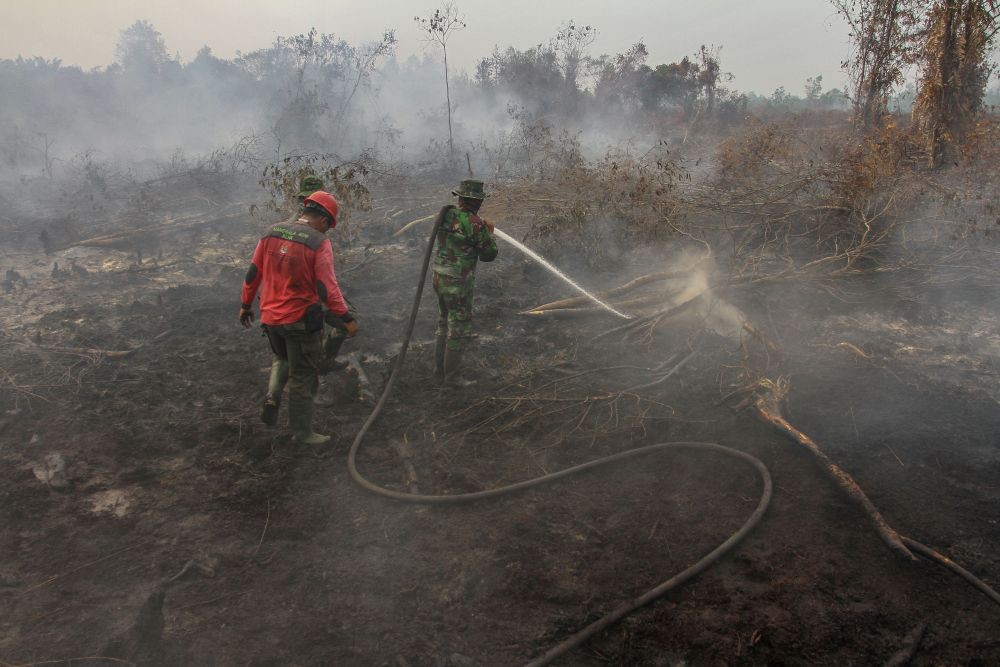 Sudah 250 Hektare Lahan di Sumsel Terbakar Sejak 2 Bulan Terakhir