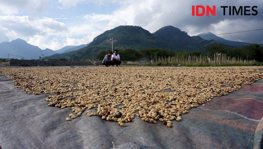 Lahan Pertanian Diserang Hama, Kementan Dorong Petani Ikut AUTP