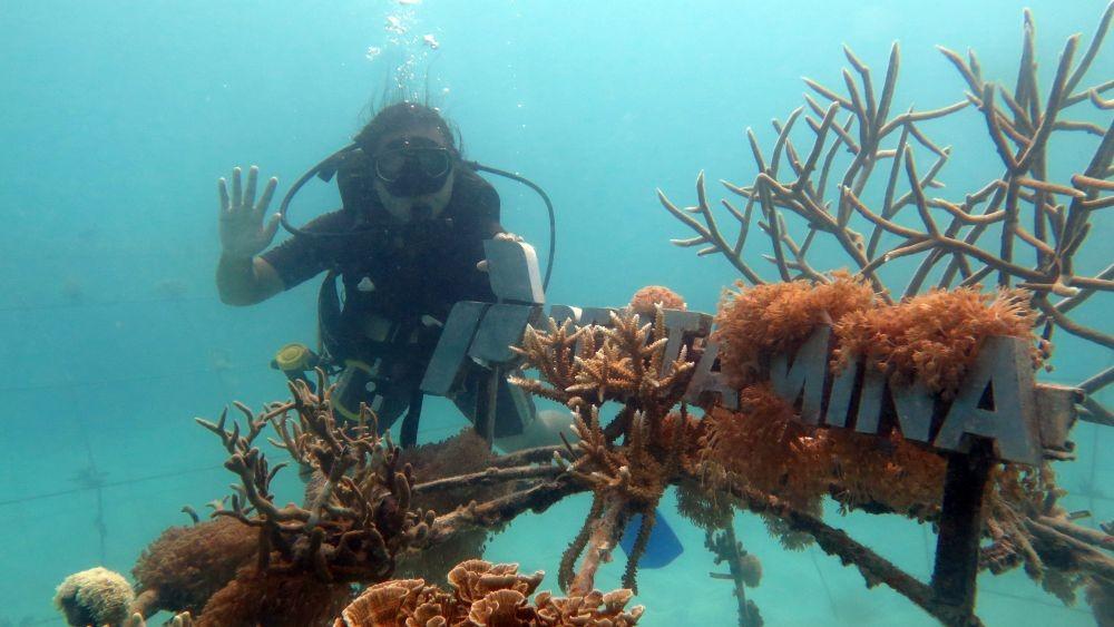 Restorasi Taman Bawah Laut Karimun Jawa, Bakal Calon Spot Wisata Baru