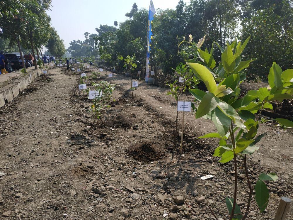 Antisipasi Banjir, DKI Bakal Sulap Taman RTH untuk Tampung Air