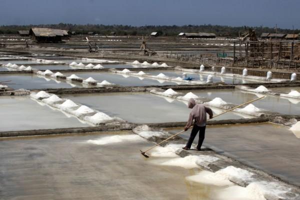 Kritik Kebijakan Impor Garam, Pustek UGM: Pemerintah Cuma Reaktif