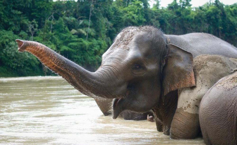 Daftar Status Hewan yang Terancam Punah di 2019 Menurut IUCN Red List