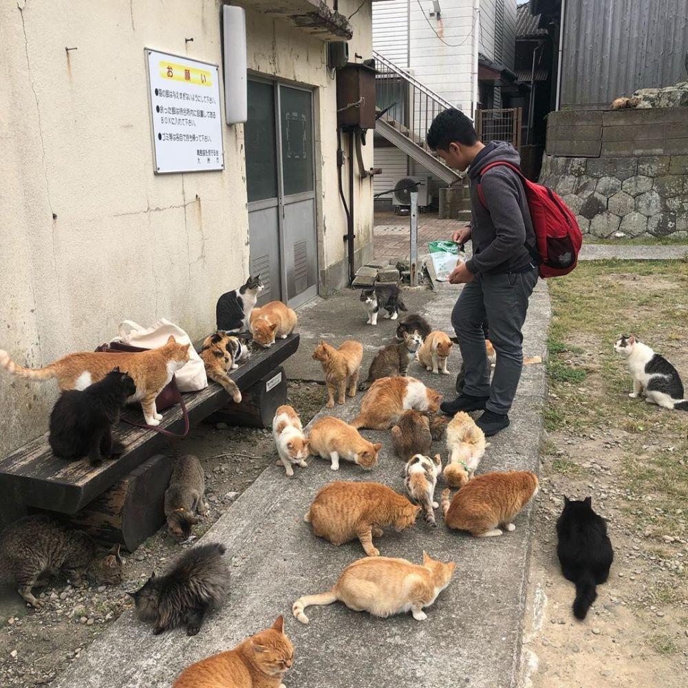 10 Fakta Unik Aoshima, Pulau Kucing di Jepang yang Gemesin Banget!