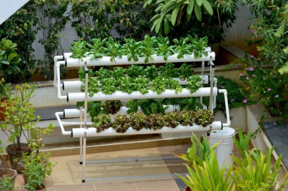 Langkah Membuat Taman Hidroponik Sederhana dari Pipa Paralon