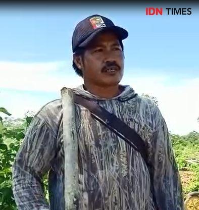 Warga Ibu Kota Baru Khawatir Tradisi Tanam Padi Gunung Menghilang