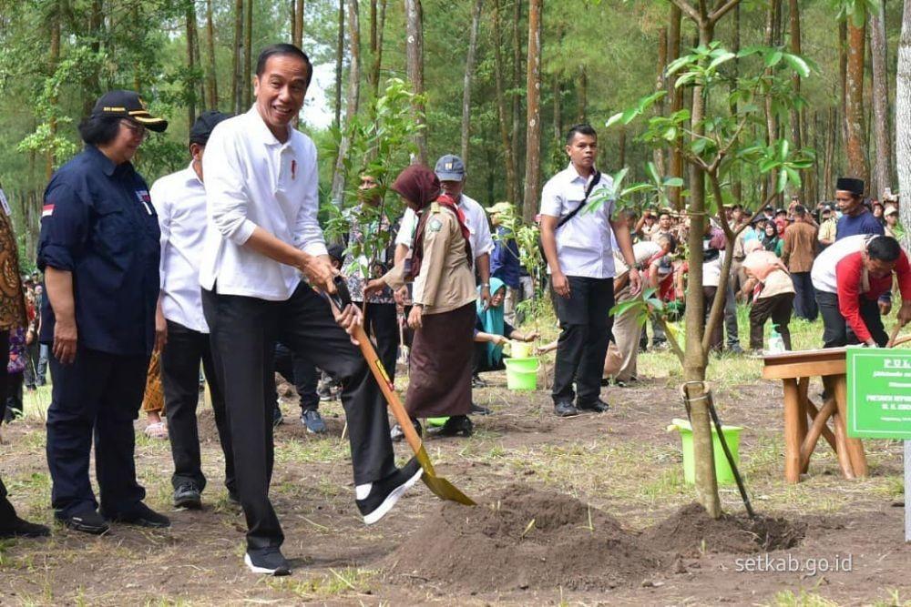 Jokowi Lepas Abu dan Rossy Sepasang Elang Jawa di Gunung Merapi