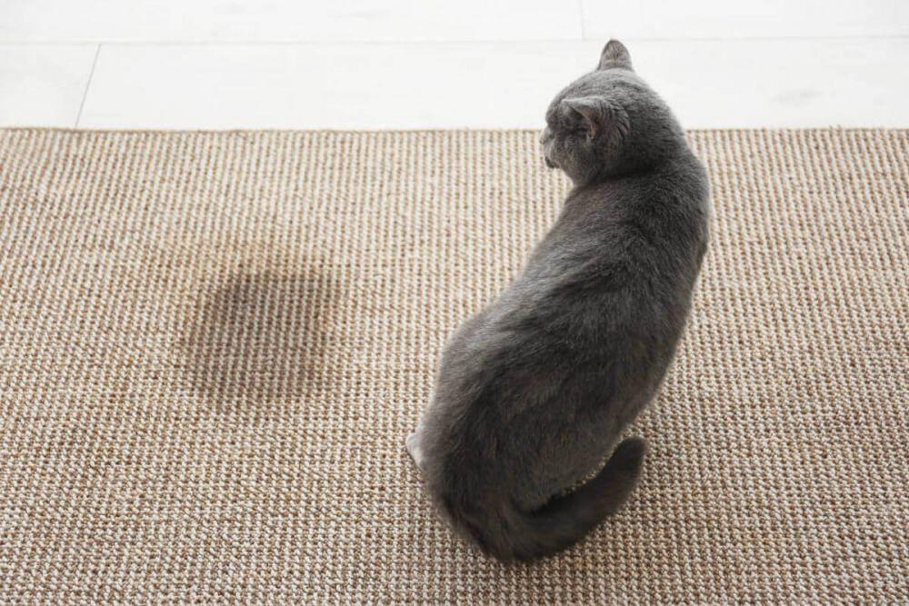 Kucing 101: Ini 7 Gejala Kucingmu Menderita Gangguan Saluran Kemih