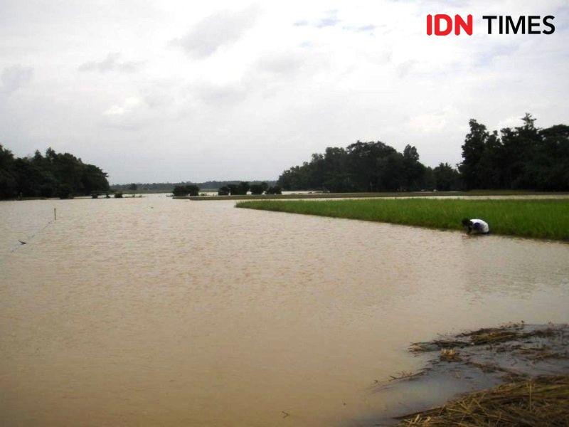 Hujan Potensi Banjir, Kementan Terus Sosialisasikan Asuransi Pertanian