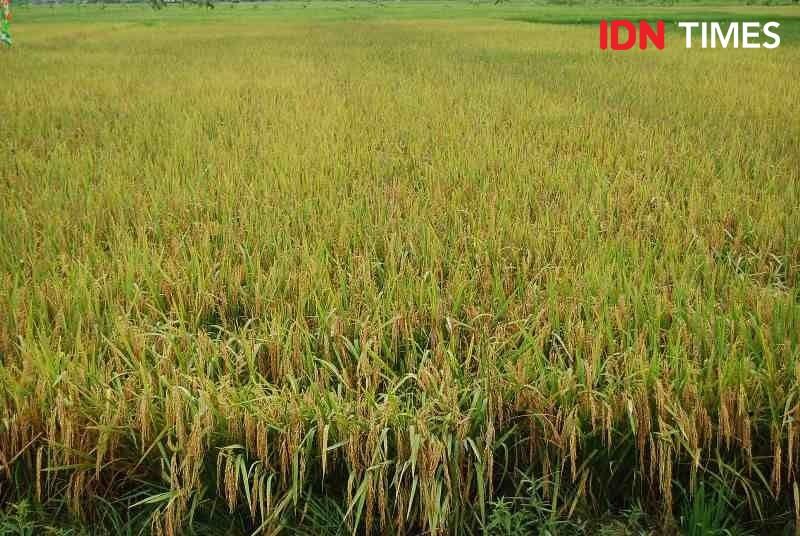 Mentan Ajak Petani dan Pimpinan Daerah Manfaatkan KUR Sektor Pertanian