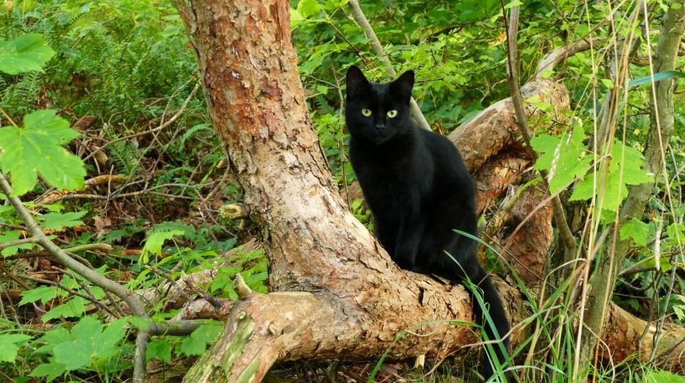 Menabrak Kucing Bisa Bikin Sial, Mitos dari Mesir?