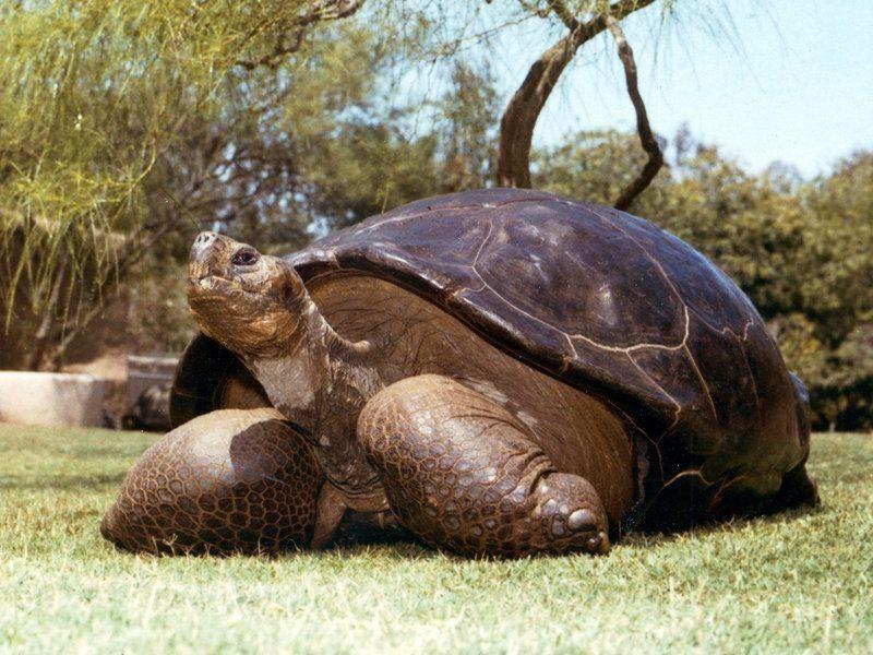 10 Hewan Ini juga Berpuasa, Ada yang Mampu Bertahan hingga 10 Tahun