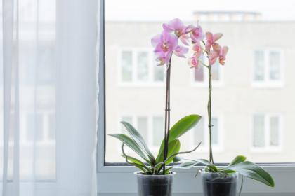 Biar Betah WFH, Ini 8 Tanaman Bikin Aroma Rumah Jadi Wangi