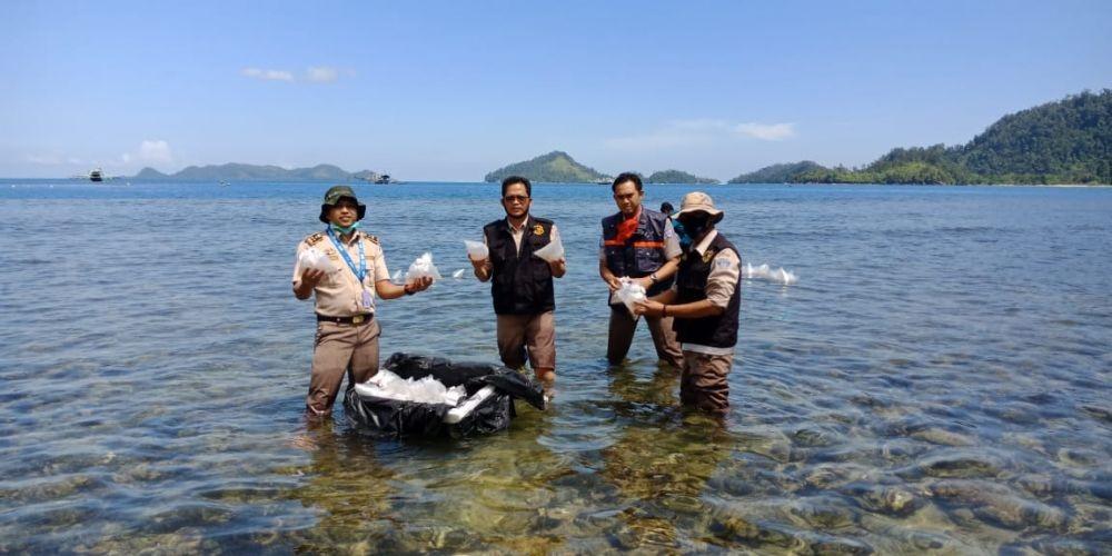 Ekspor Benih Lobster Siap Dilanjut Lagi di Tangan Luhut